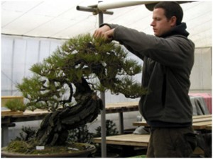 Ryan Neil Bonsai Societies Of Florida
